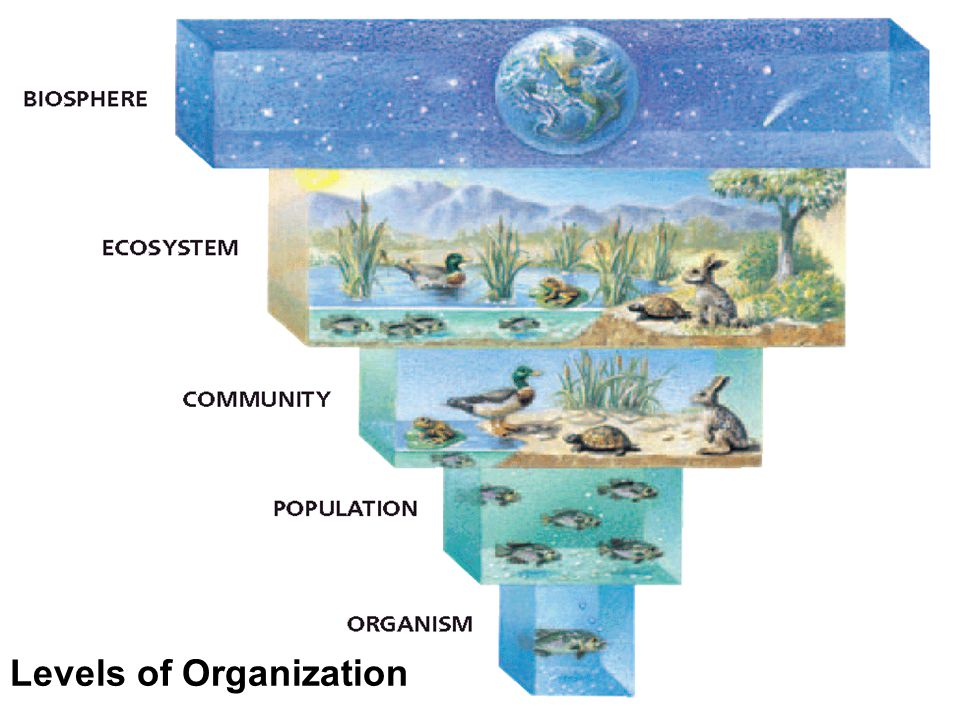 An ecosystem, consists of a community and all the physical aspects of its habitat, such as the soil, water, and weather The physical aspects of a habi