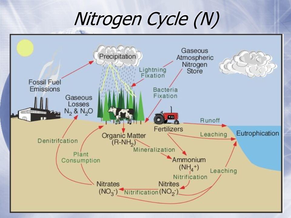 Nitrogen Cycle (N)
