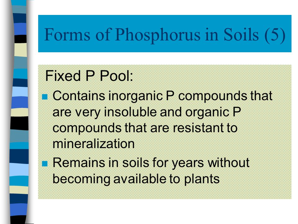 Forms of Phosphorus in Soils (4) n The amount of P absorbed by plants increases as the amount of P in soils increases