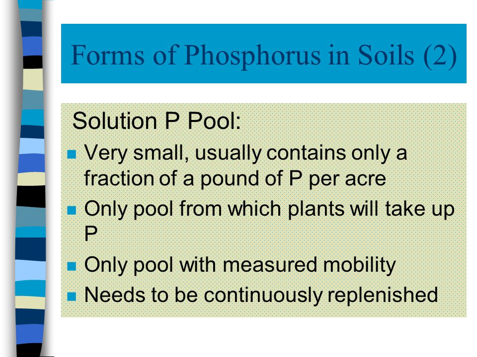 Forms of Phosphorus in Soils P in soils exists in three pools n Solution P n Active P n Fixed P