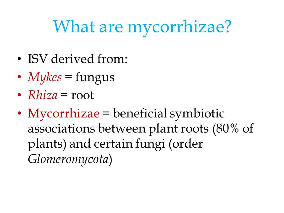 What are mycorrhizae.