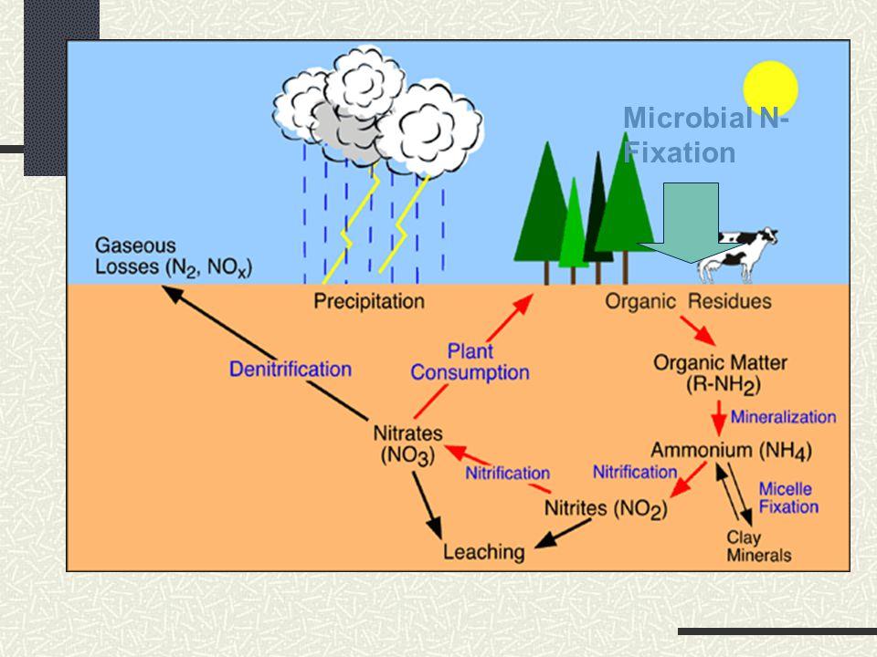 Microbial N- Fixation