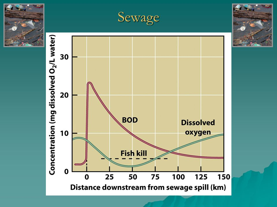 Sewage- Eutrophication o Oligotrophic Unenriched, clear water that supports small populations of aquatic organisms Unenriched, clear water that supports small populations of aquatic organisms