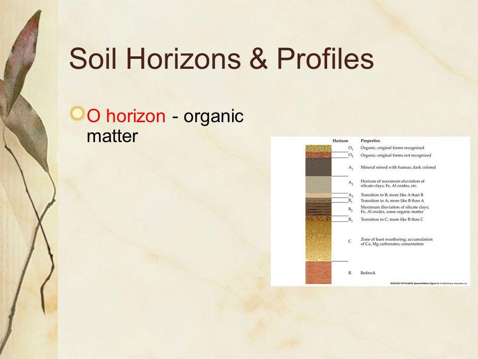 Soil Horizons & Profiles O horizon - organic matter