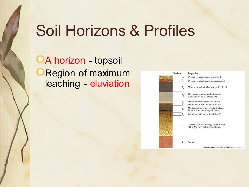 Soil Horizons & Profiles A horizon - topsoil Region of maximum leaching - eluviation