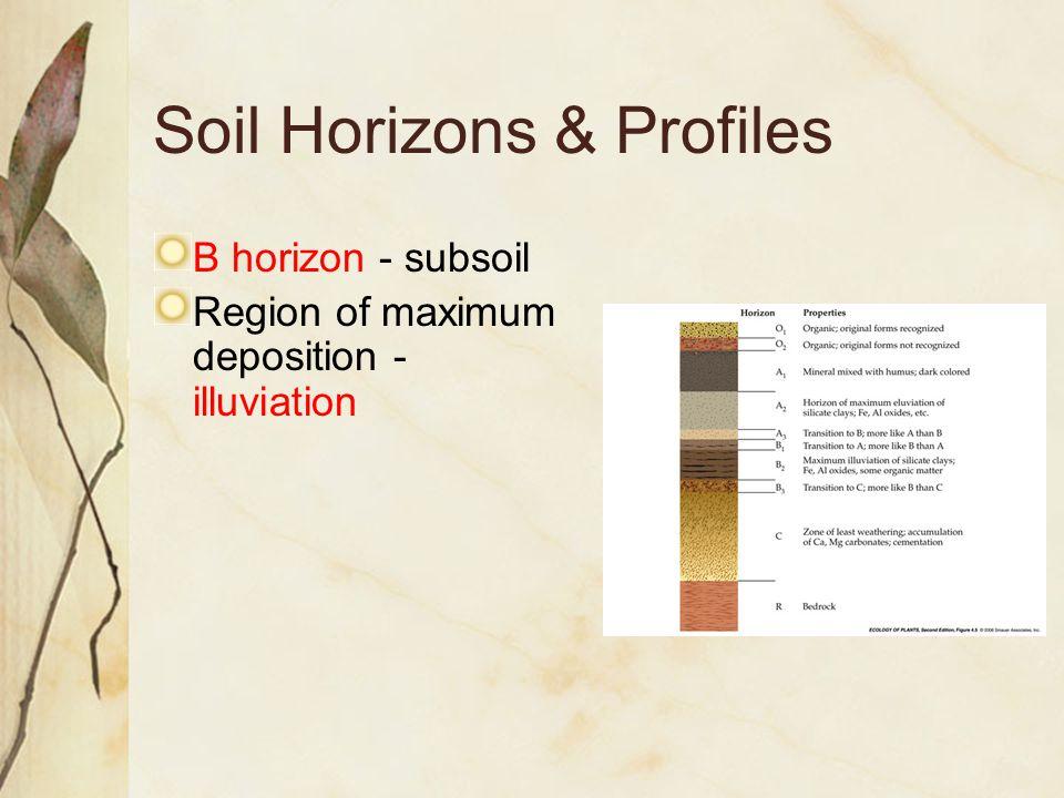 Soil Horizons & Profiles B horizon - subsoil Region of maximum deposition - illuviation