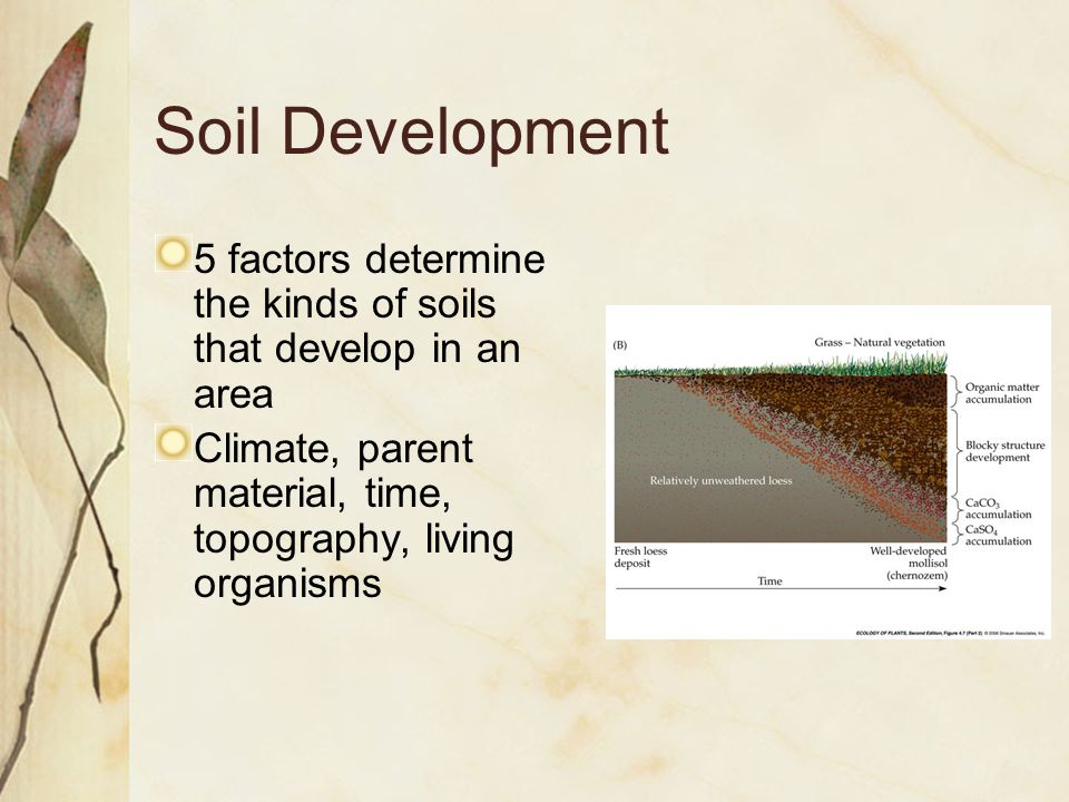 Soil Development 5 factors determine the kinds of soils that develop in an area Climate, parent material, time, topography, living organisms