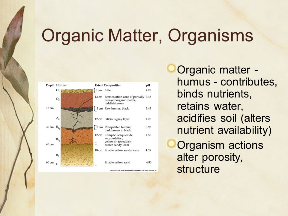 Organic Matter, Organisms Organic matter - humus - contributes, binds nutrients, retains water, acidifies soil (alters nutrient availability) Organism actions alter porosity, structure
