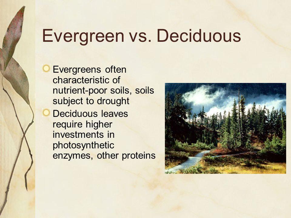 Evergreen vs.