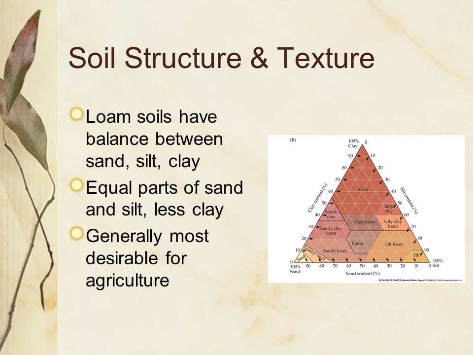 Loam soils have balance between sand, silt, clay Equal parts of sand and silt, less clay Generally most desirable for agriculture