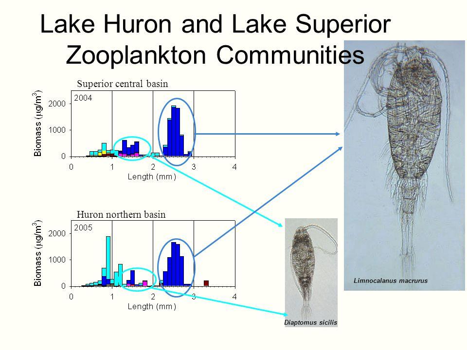 Superior central basin Huron northern basin Diaptomus sicilis Limnocalanus macrurus Lake Huron and Lake Superior Zooplankton Communities