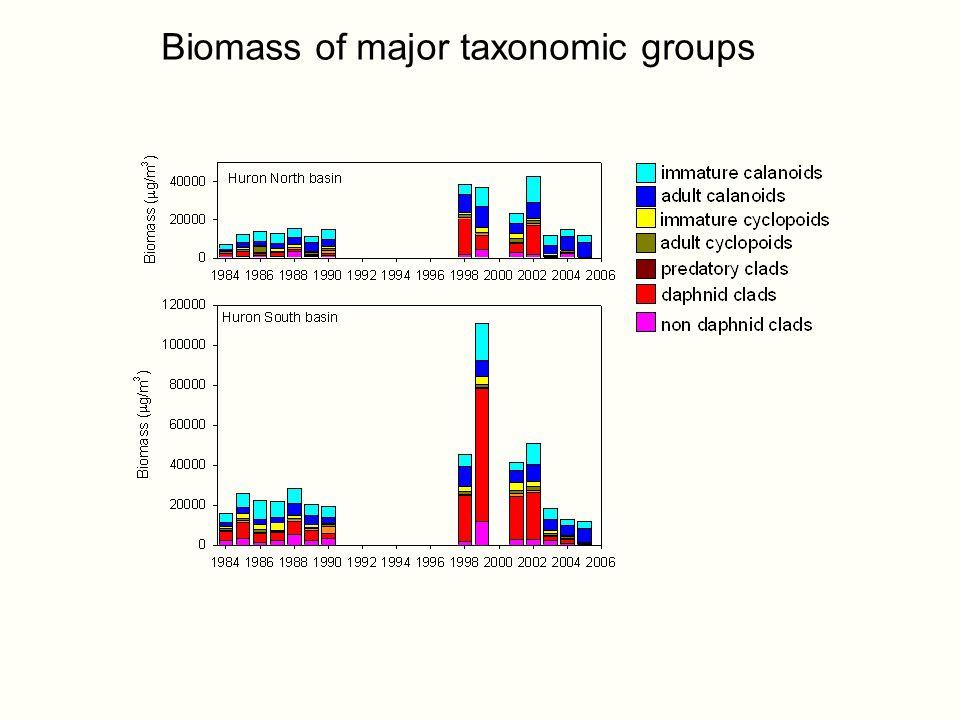 Biomass of major taxonomic groups