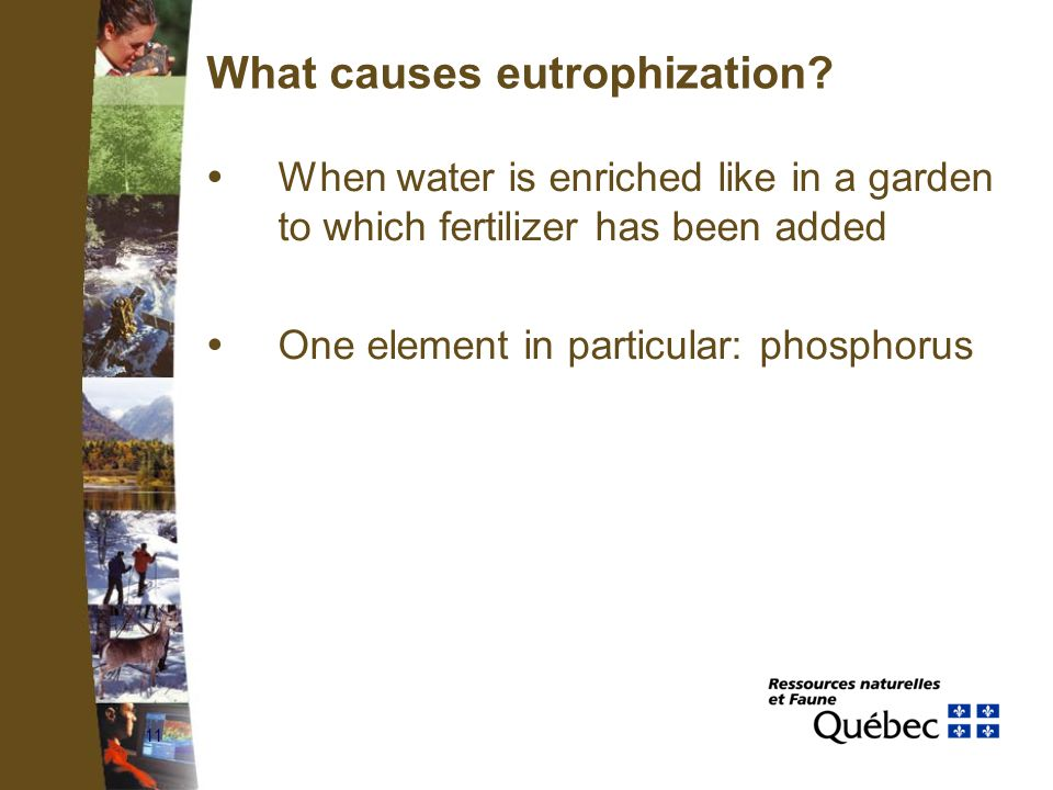 11 What causes eutrophization?  When water is enriched like in a garden to which fertilizer has been added  One element in particular: phosphorus
