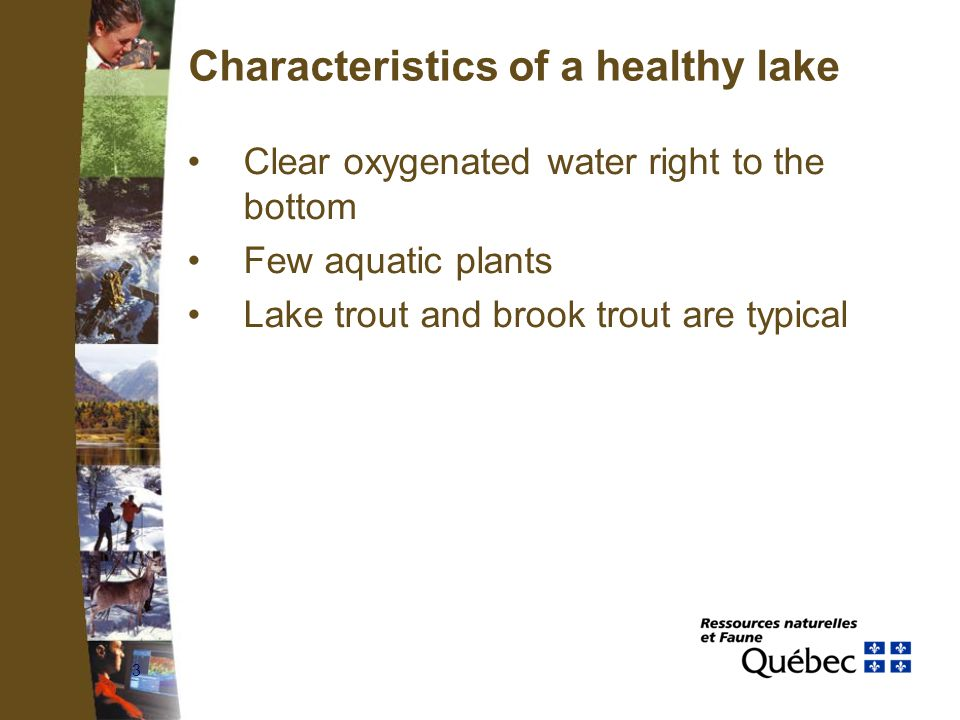 3 Characteristics of a healthy lake Clear oxygenated water right to the bottom Few aquatic plants Lake trout and brook trout are typical