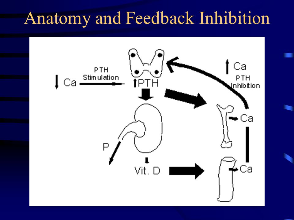 Anatomy and Feedback Inhibition