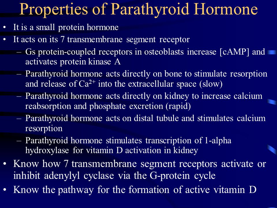 Properties of Parathyroid Hormone It is a small protein hormone It acts on its 7 transmembrane segment receptor –Gs protein-coupled receptors in osteo