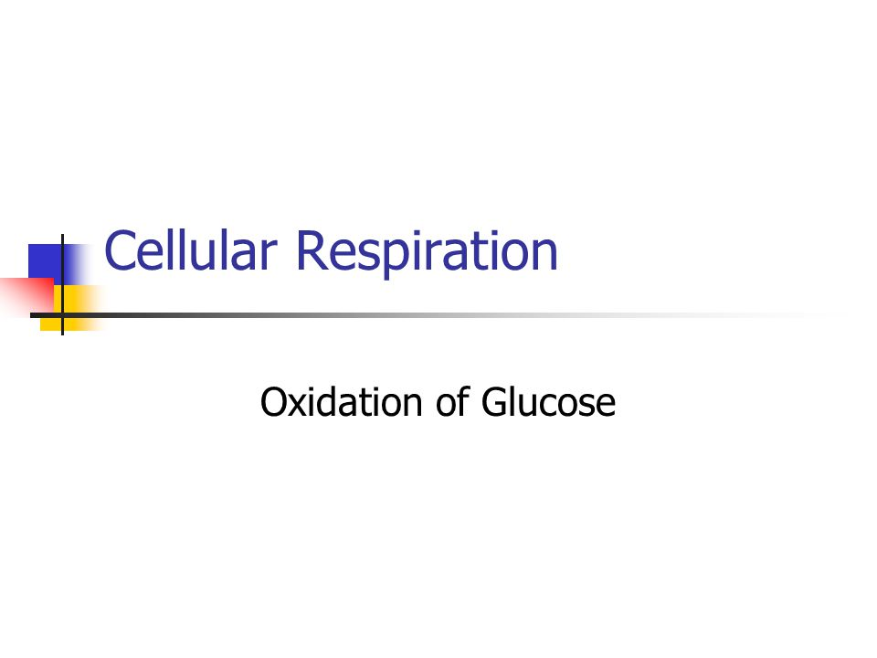 Cellular Respiration Oxidation of Glucose