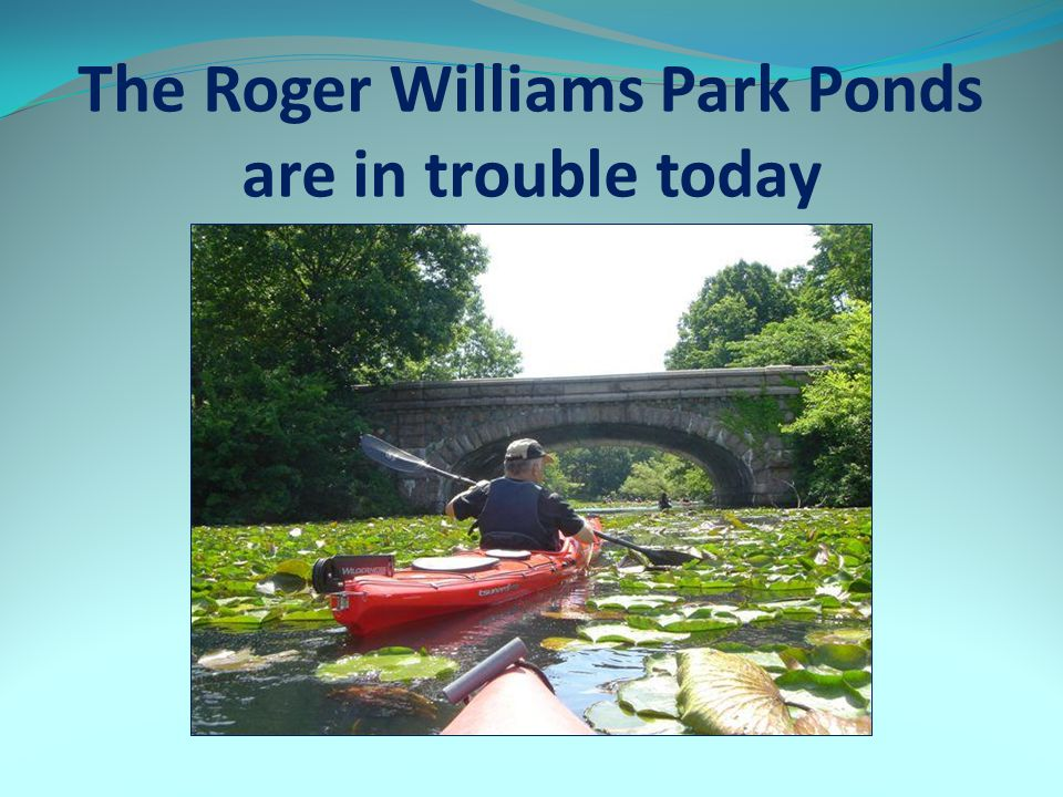 The Roger Williams Park Ponds are in trouble today