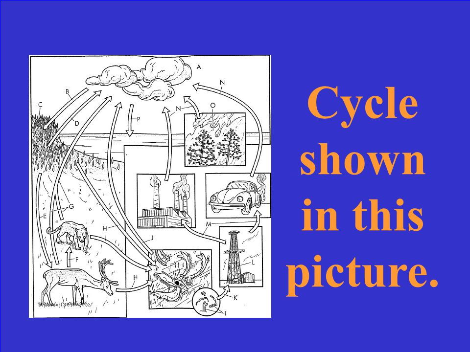 What is the biogeochemical cycle