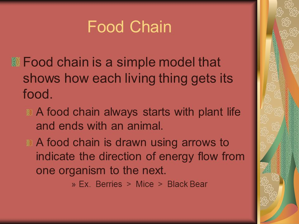 Food Chain Food chain is a simple model that shows how each living thing gets its food.