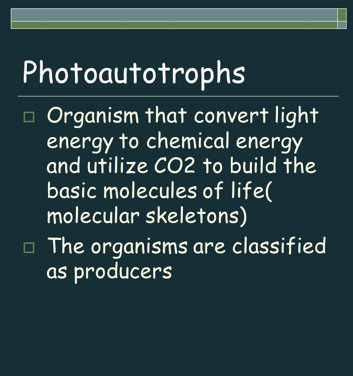 Photoautotrophs  Organism that convert light energy to chemical energy and utilize CO2 to build the basic molecules of life( molecular skeletons)  The organisms are classified as producers