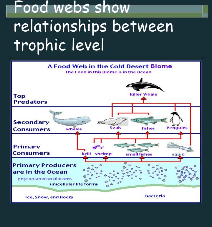 Food webs show relationships between trophic level
