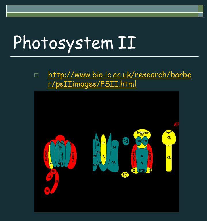 Photosystem II  http://www.bio.ic.ac.uk/research/barbe r/psIIimages/PSII.html http://www.bio.ic.ac.uk/research/barbe r/psIIimages/PSII.html