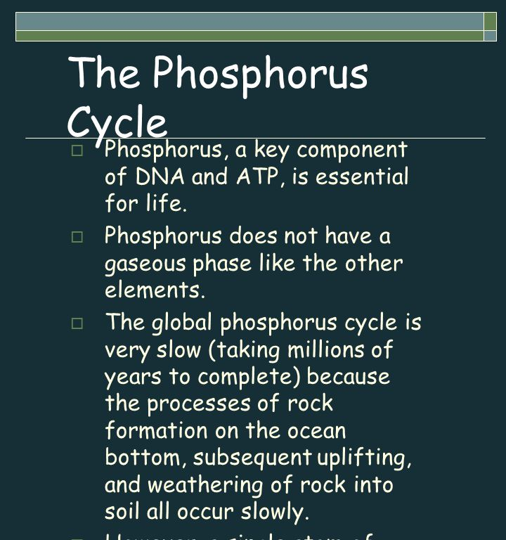 The Phosphorus Cycle  Phosphorus, a key component of DNA and ATP, is essential for life.