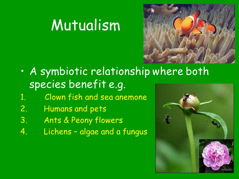 Symbiosis (living together) A close and permanent relationship between organisms of different species 3 Types Mutualism Commensalism Parasitism