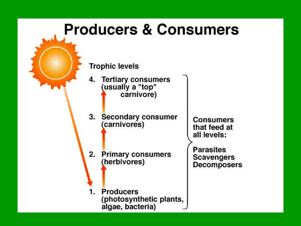 Energy flow in an ecosystem Pyramid of Energy – 90% of energy lost in each trophic level 100% Producers get 100% of energy available 10% Primary consumers get 10% of energy available 1% Secondary consumers get 1% of energy available 0.1% Tertiary consumers get 0.1% of energy available