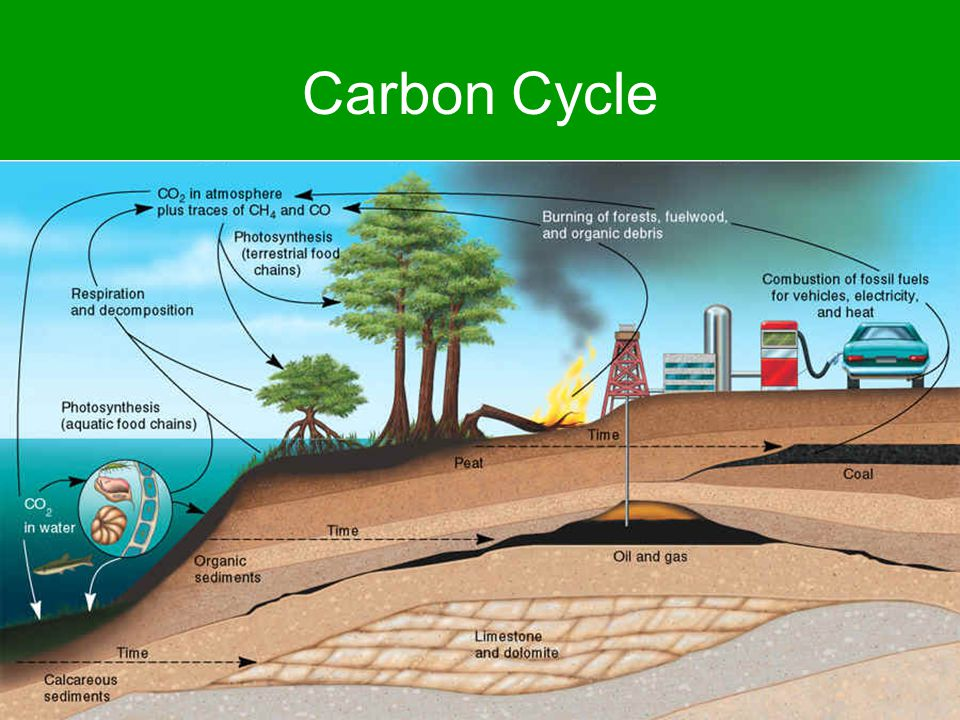 Carbon Cycle Atmospheric CO 2 (burning, fuel combustion, respiration) Death & decay result in fossil fuel formation Photosynthesis (CO 2 conversion into glucose) Biomass – storage of carbon as coarse woody debris