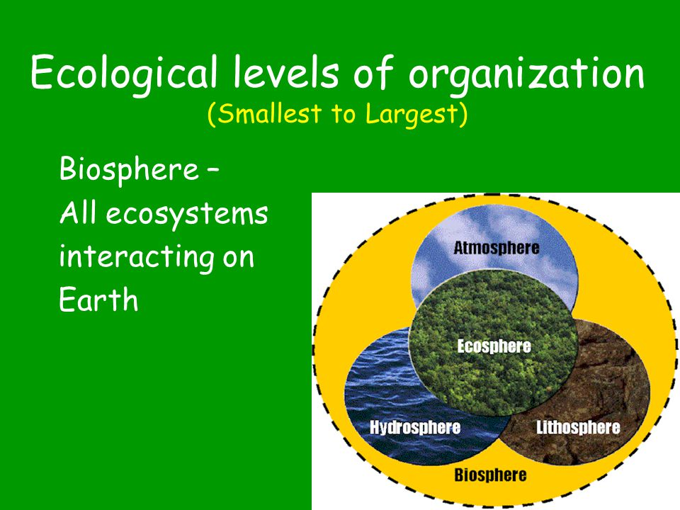 Ecological levels of organization (Smallest to Largest) Ecosystem – Plant & animal populations interact with each other & the abiotic factors in an environment 1.