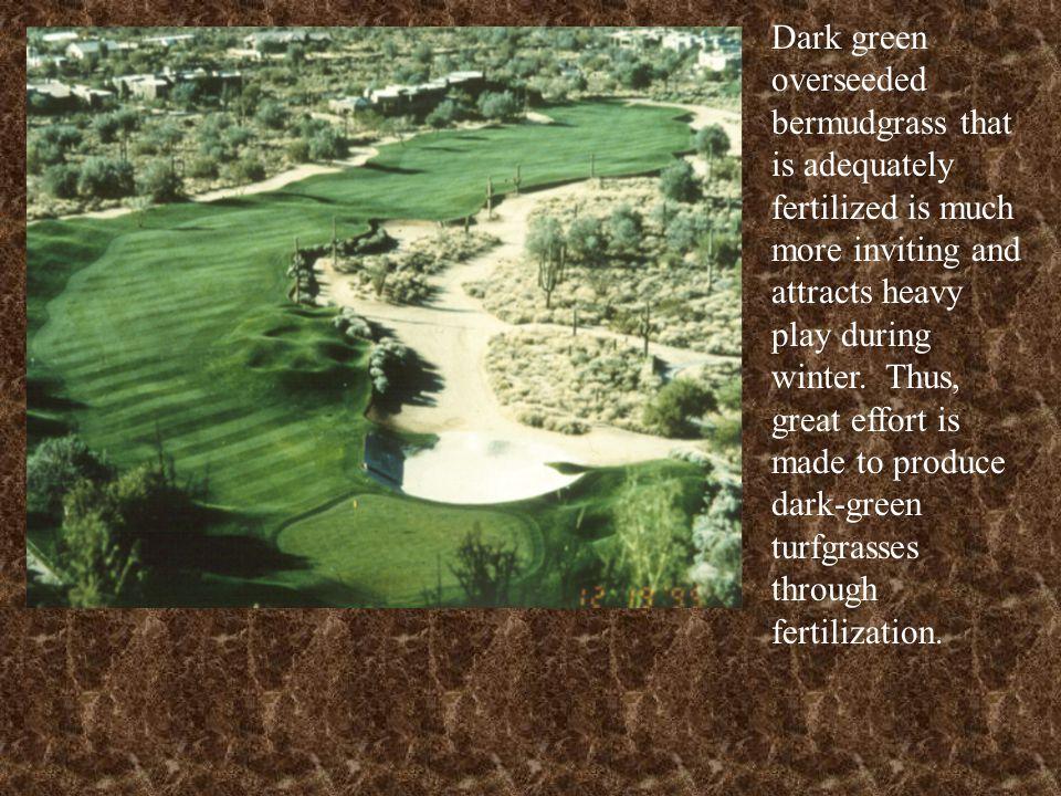 High phosphorus fertilizers contribute to iron deficiencies in turfgrasses.