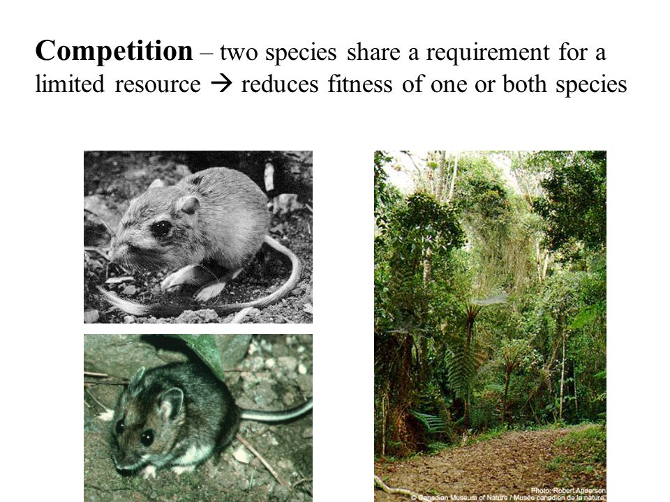 Competition – two species share a requirement for a limited resource  reduces fitness of one or both species