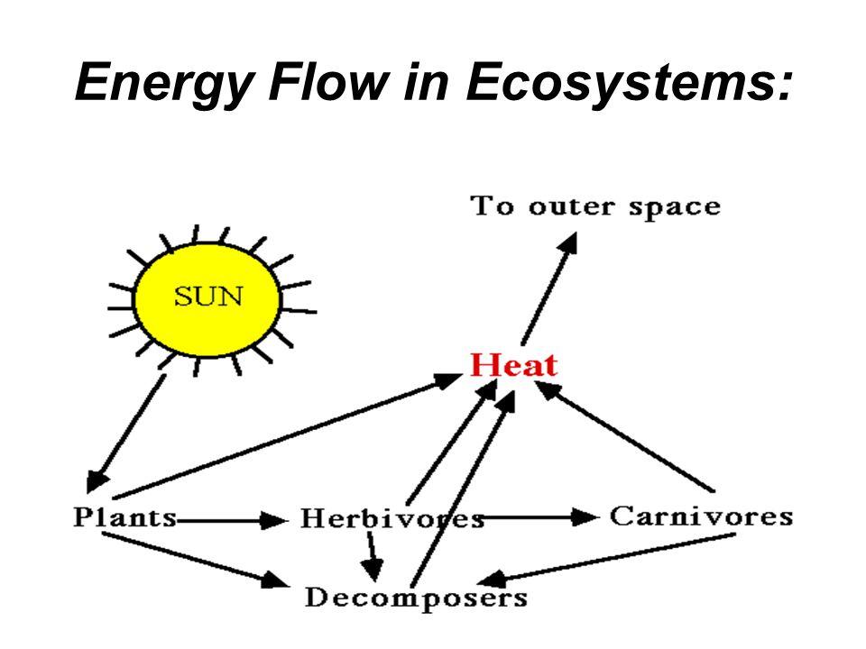 Energy Flow in Ecosystems: