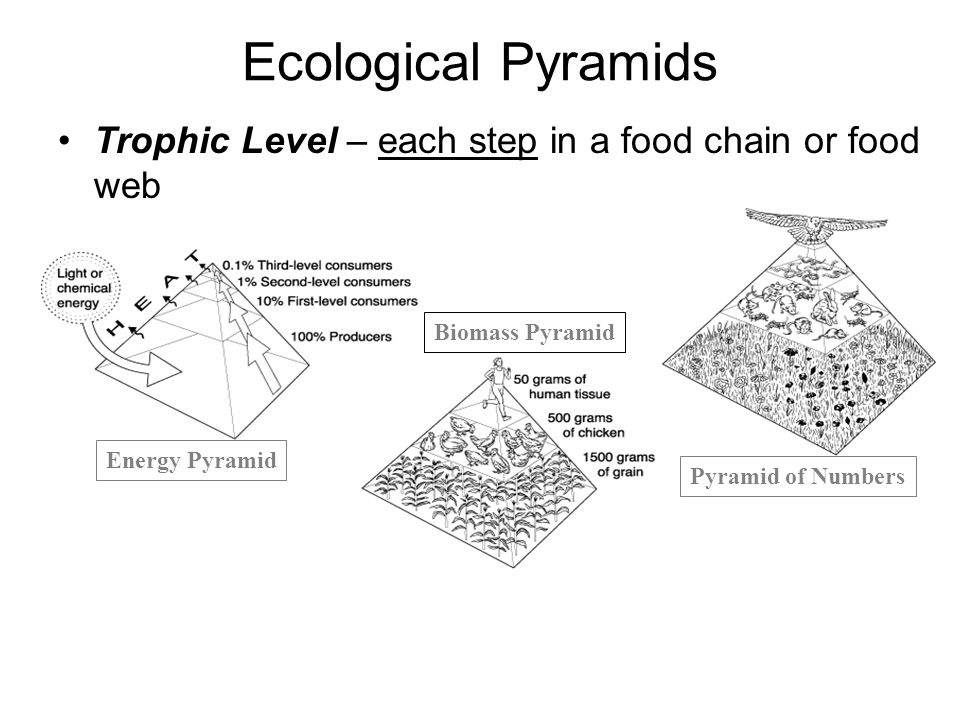 Ecological Pyramids Energy Pyramid Biomass Pyramid Pyramid of Numbers Trophic Level – each step in a food chain or food web