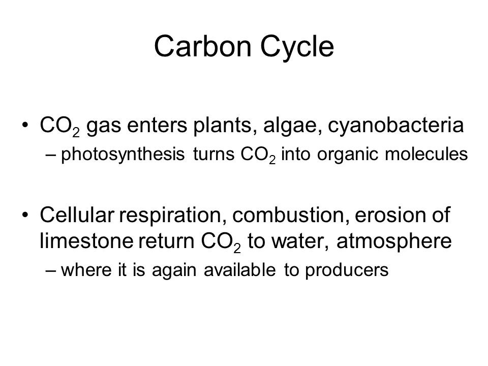 Carbon Cycle CO 2 gas enters plants, algae, cyanobacteria –photosynthesis turns CO 2 into organic molecules Cellular respiration, combustion, erosion