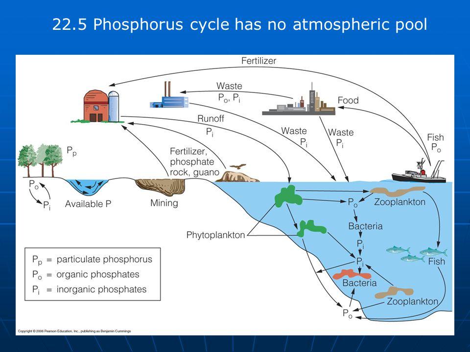 22.5 Phosphorus cycle has no atmospheric pool