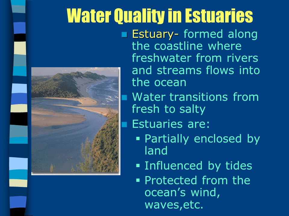 Water Quality in Estuaries Estuary- Estuary- formed along the coastline where freshwater from rivers and streams flows into the ocean Water transitions from fresh to salty Estuaries are:  Partially enclosed by land  Influenced by tides  Protected from the ocean's wind, waves,etc.