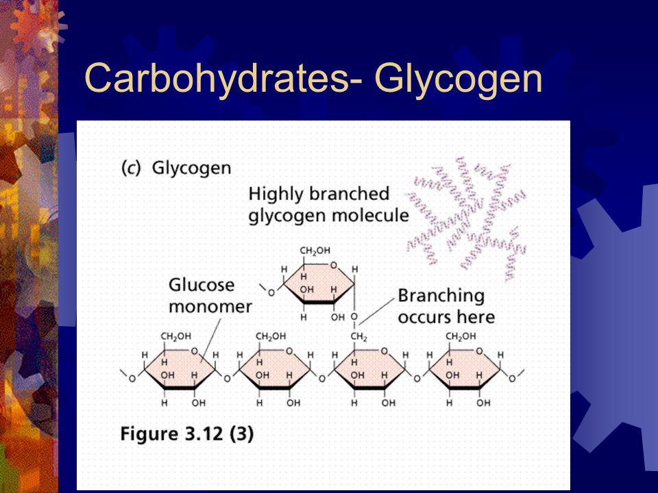 Carbohydrates- Glycogen