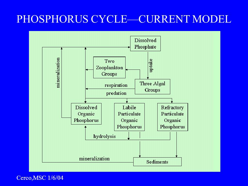 PHOSPHORUS CYCLE—CURRENT MODEL Cerco,MSC 1/6/04