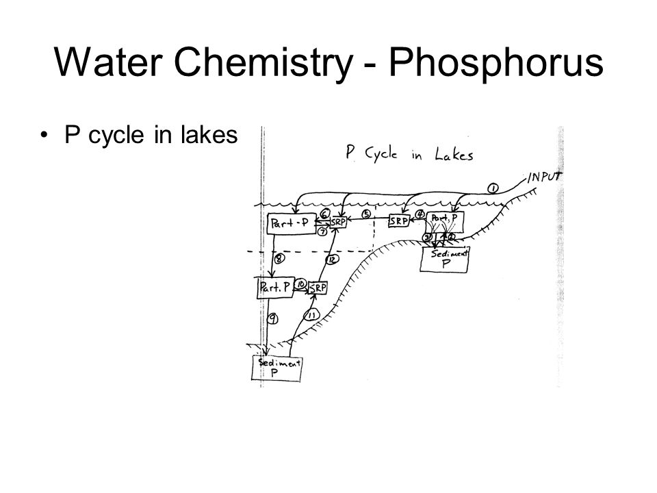 Water Chemistry - Phosphorus P cycle in lakes