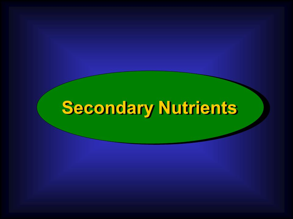 Iron (Fe) Function: Essential for formation of chlorophyll, releases energy from sugars and starches.