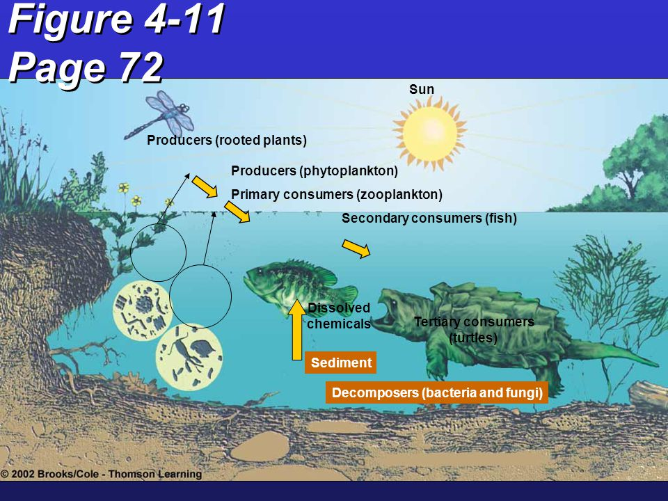 Ecosystem Concepts Abiotic Factors –Determine life forms in a given area –What are key abiotic factors.