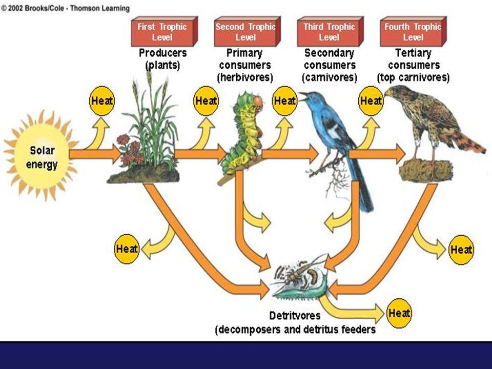 Biodiversity  Genetic diversity  Species diversity  Ecological diversity  Functional diversity