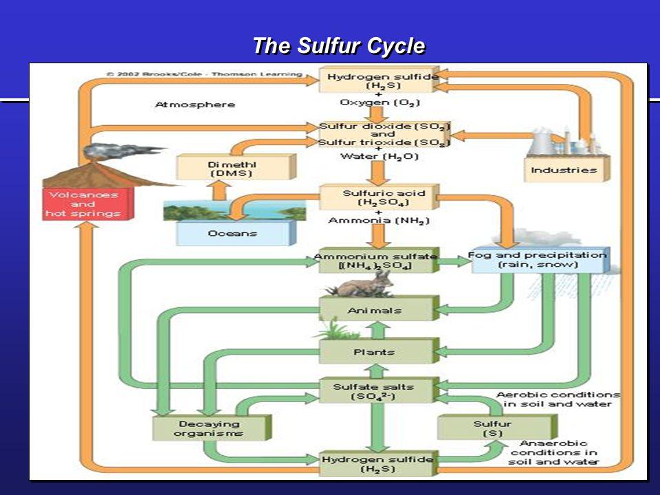 The Phosphorus Cycle Fig. 4-30 p. 88