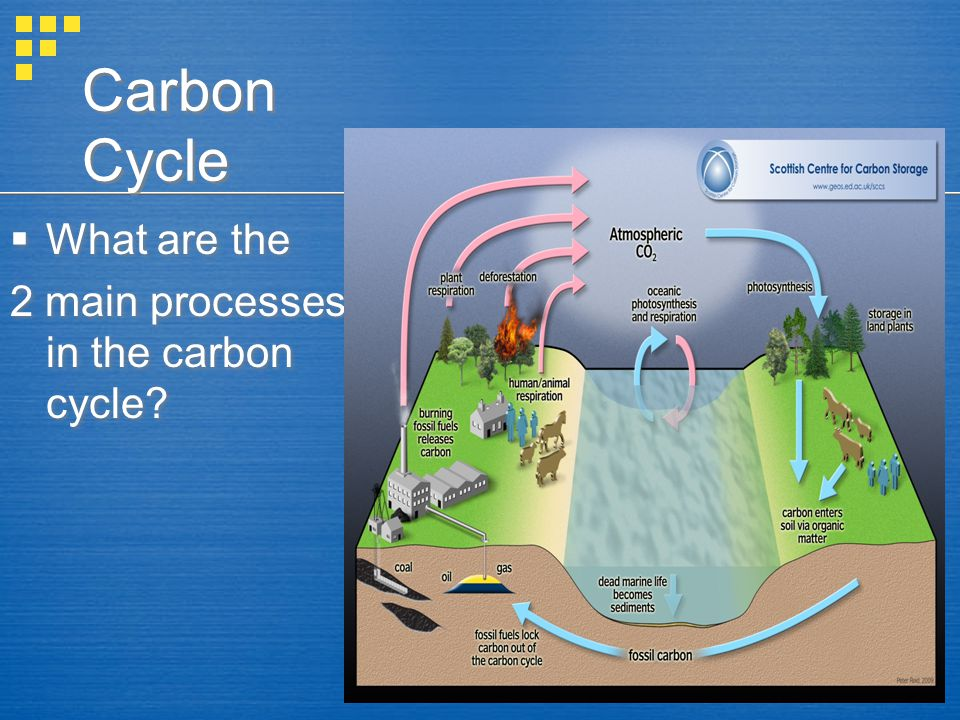 Carbon Cycle  Carbon (C) enters the biosphere during photosynthesis:  CO 2 + H 2 O (carbon dioxide+ water)---> C 6 H 12 O 6 + O 2 + H 2 O(sugar+oxygen+water)  Carbon is returned to the biosphere in cellular respiration:  O 2 +H 2 O + C 6 H 12 O 6 ---> CO 2 +H 2 O + energy  Carbon (C) enters the biosphere during photosynthesis:  CO 2 + H 2 O (carbon dioxide+ water)---> C 6 H 12 O 6 + O 2 + H 2 O(sugar+oxygen+water)  Carbon is returned to the biosphere in cellular respiration:  O 2 +H 2 O + C 6 H 12 O 6 ---> CO 2 +H 2 O + energy