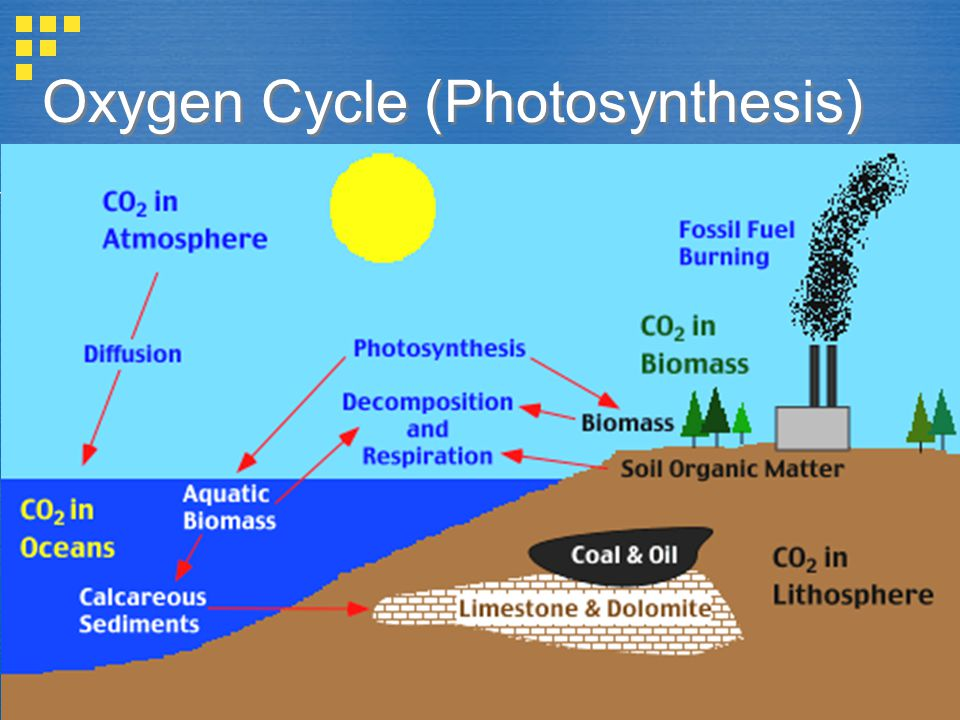 Sources of Oxygen:  Photosynthesis and respiration  Photo disassociation of H 2 O vapor  CO 2 and O 2 circulates freely throughout the biosphere.