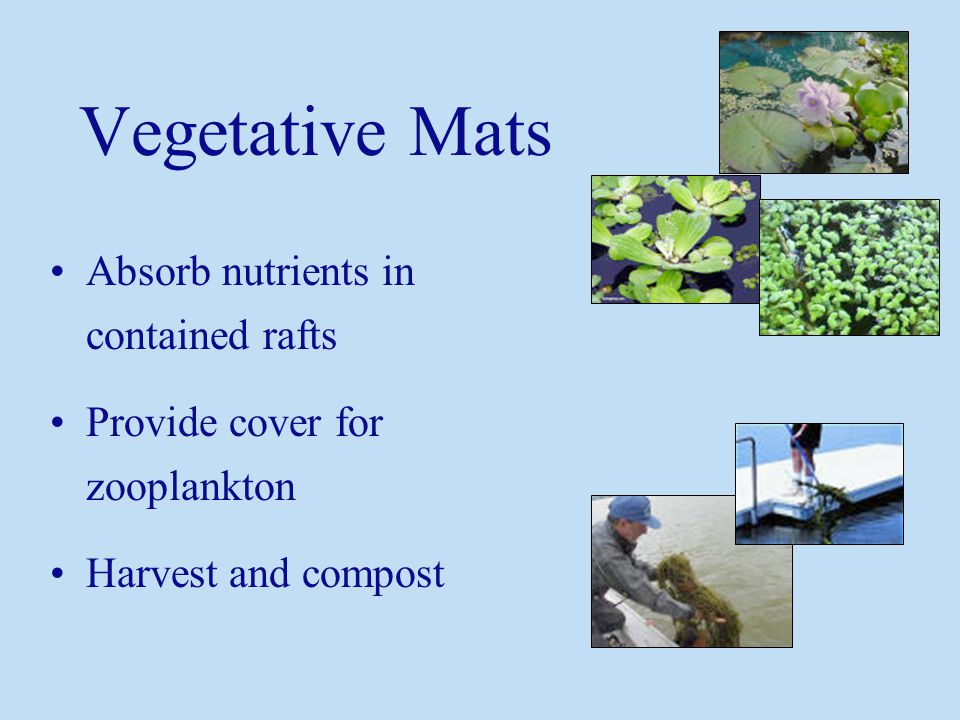 Vegetative Mats Absorb nutrients in contained rafts Provide cover for zooplankton Harvest and compost