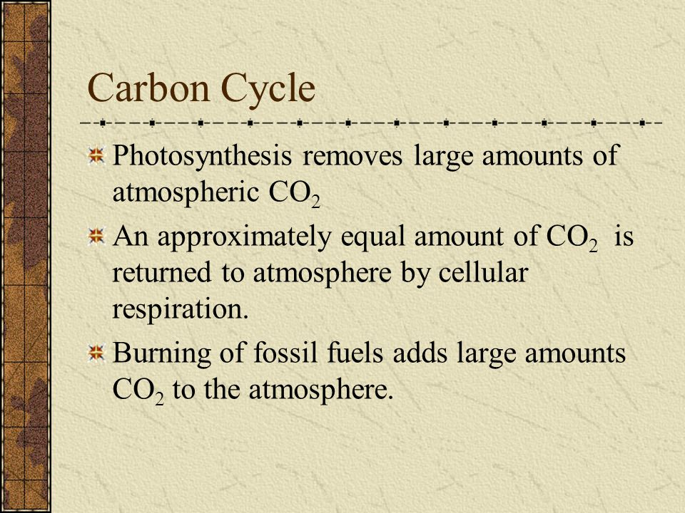 Carbon Cycle Photosynthesis removes large amounts of atmospheric CO 2 An approximately equal amount of CO 2 is returned to atmosphere by cellular resp